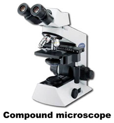 Microscope image showing scalebar